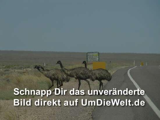 Emu-Crossing.