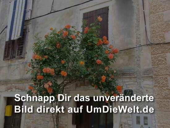 Foto: Angelina Litvin, Unsplash.com , Lizenz: ( CC0 1.0 )