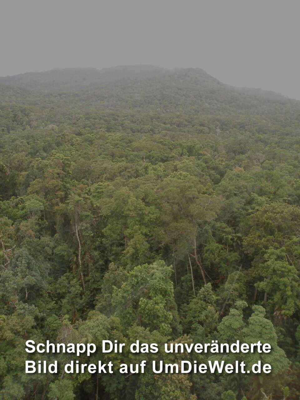 Australien reisebericht kuranda daintree cape for Boden im regenwald