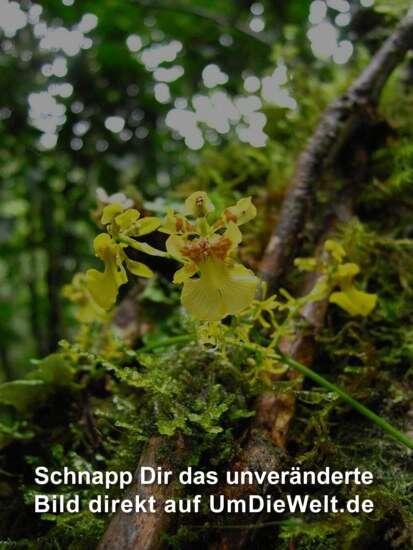 Orchideenarten+bilder