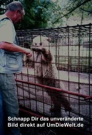 Hundekuchen kommt auch bei Bären gut an!