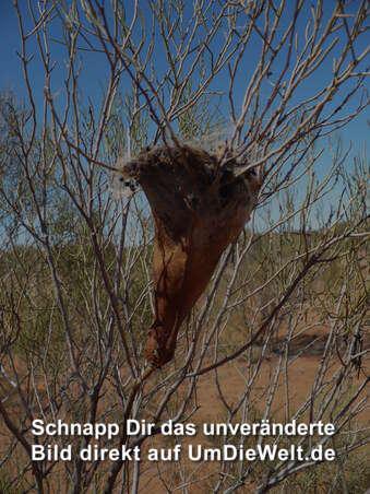 Australien reisebericht kakadus känguruhs und korallen