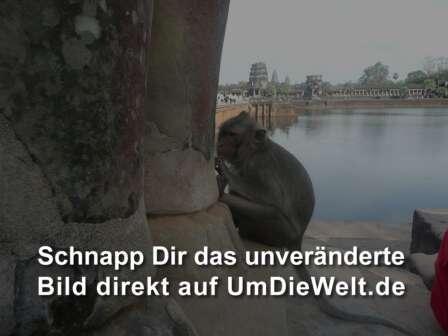 Affen kennenlernen