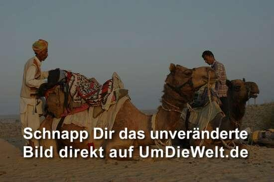 indien reisebericht mit dem kamel in die wueste thar. Black Bedroom Furniture Sets. Home Design Ideas