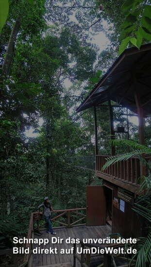 malaysia reisebericht canopy walk. Black Bedroom Furniture Sets. Home Design Ideas