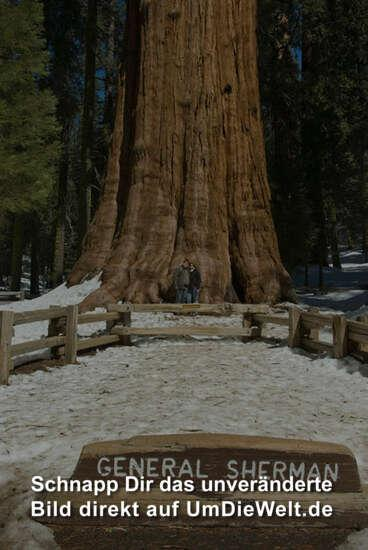 usa reisebericht sequoia national park. Black Bedroom Furniture Sets. Home Design Ideas