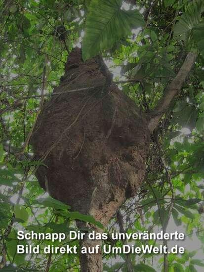 Peru reisebericht nationalpark manu uns h lt nichts auf - Baum auf spanisch ...