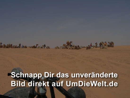 nur die Kamele ncicht erschrecken