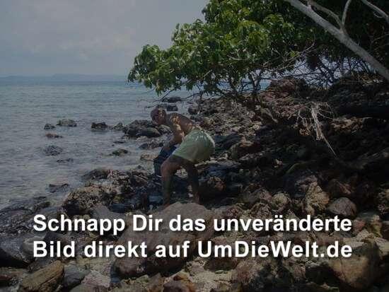 """...durch's """"Unterholz""""...."""
