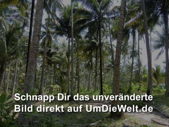 ...wir finden einen Weg unter Palmen....