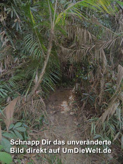 der Eintritt in den Dschungel