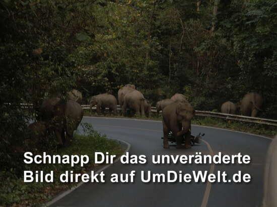 der Elefant tritt nach dem Roller
