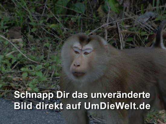 wieder mal ein Affe