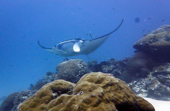 Manta - German Channel