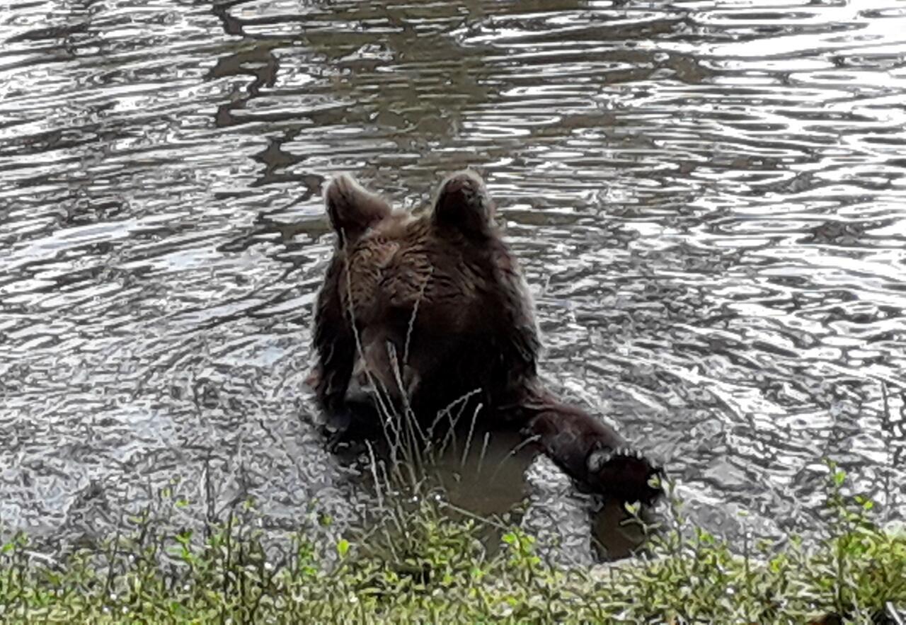 Rumänien-Reisebericht: Das Bärenreservat in Zarnesti