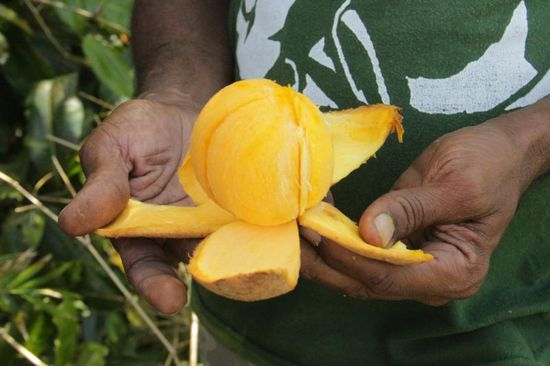 "hmm..., der ""Mami- Apple"""